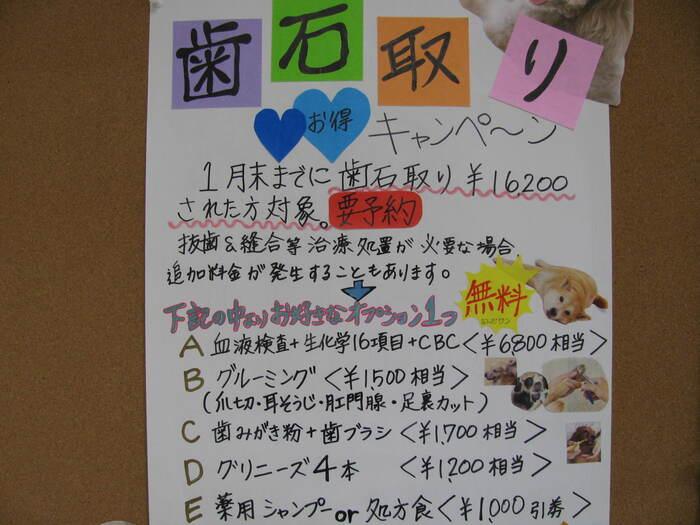 キャンペーン 005.JPG